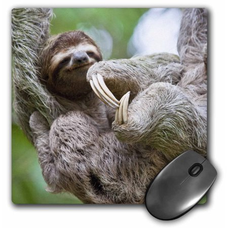 0888414192760 - 3DROSE LLC 8 X 8 X 0.25 INCHES MOUSE PAD, BROWN THROATED SLOTH WILDLIFE CORCOVADO COSTA RICA JIM GOLDSTEIN (MP_87172_1)